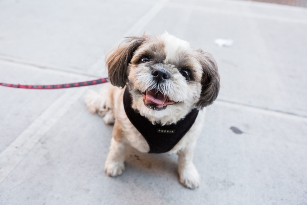 PAWS NY provides services to dogs and cats across NYC