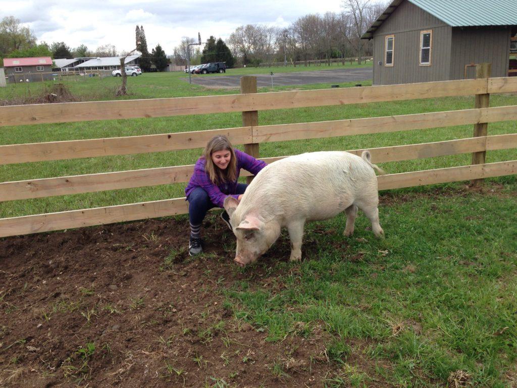 Staff Shoutout: Liz at an animal sanctuary
