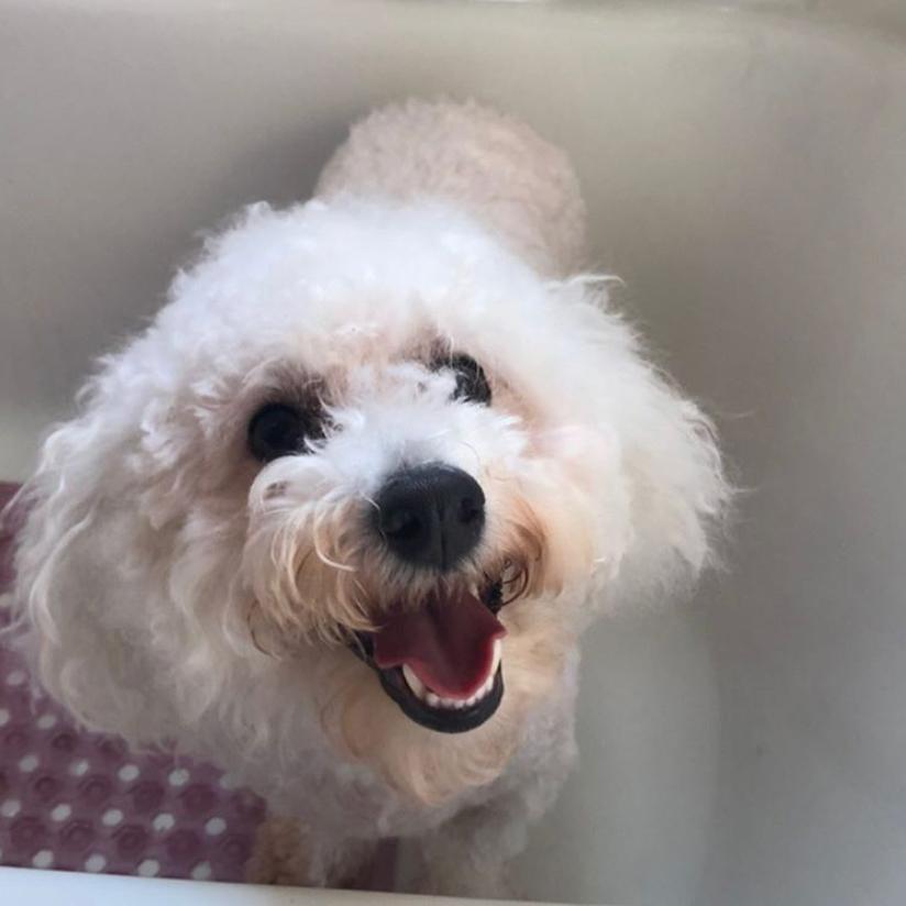 PAW NY Pup Romeo