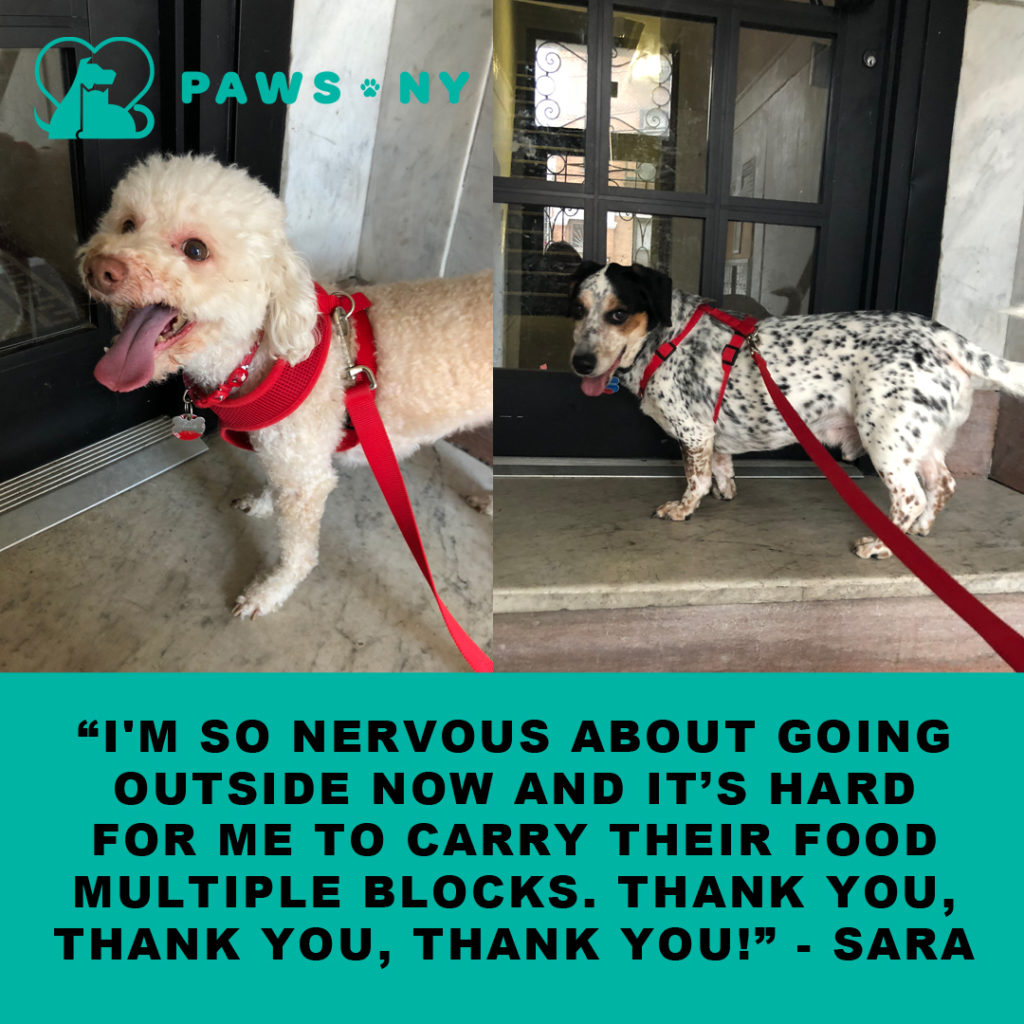 PAWS NY Client Sara comments on the COVID-19 support