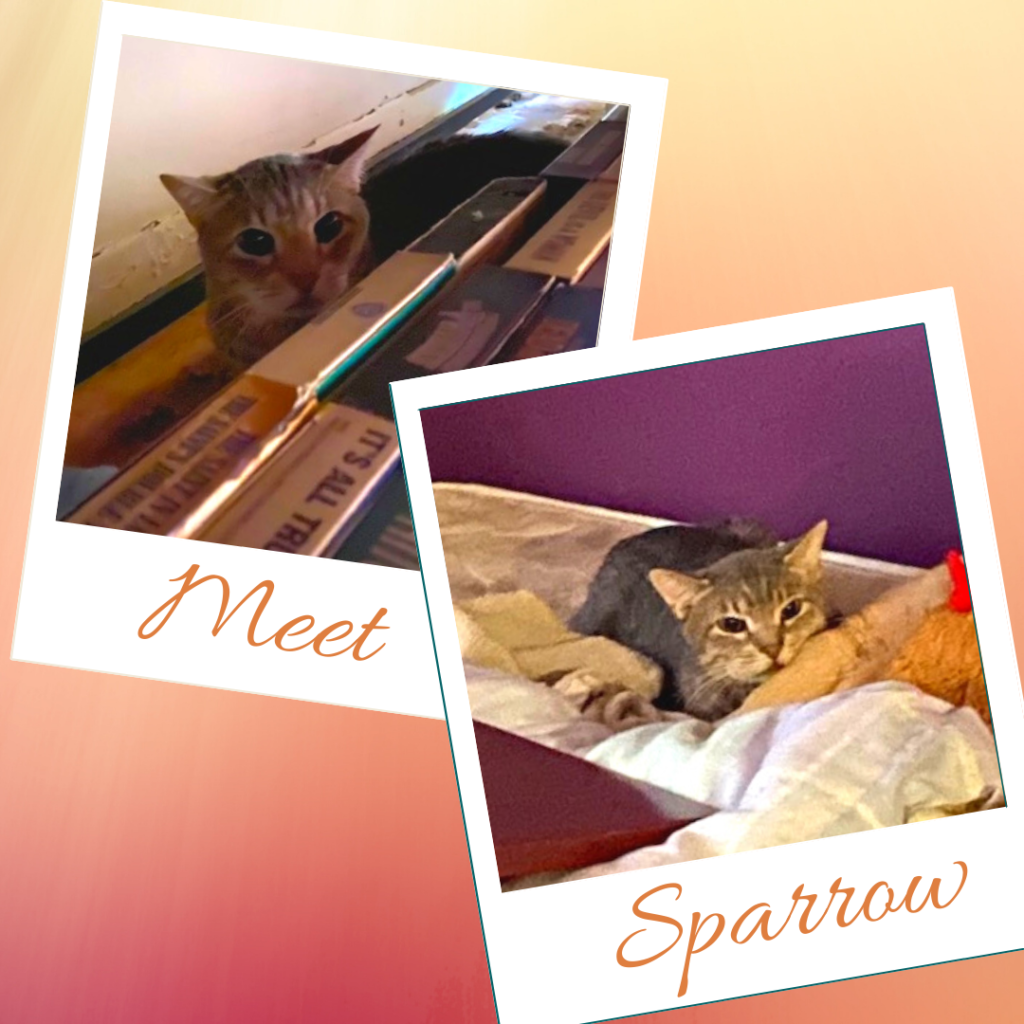 Sparrow - foster or adopt