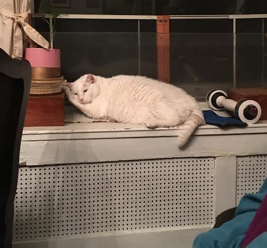 Lucy is a white cat, sitting on a radiator