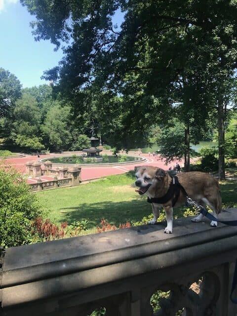 Peanut at park