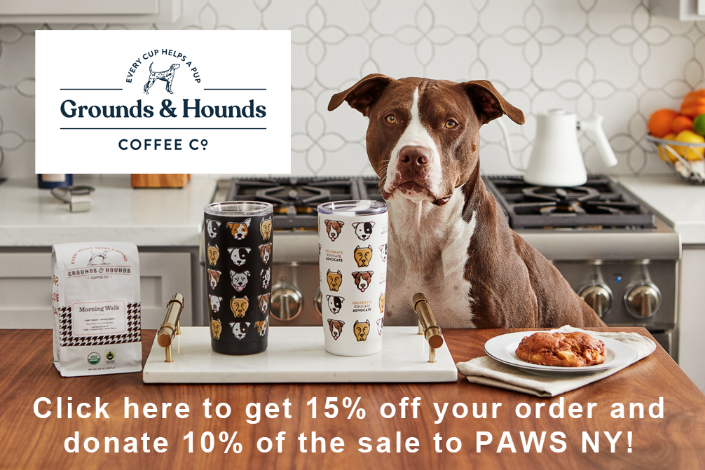 A brown and white dog looks at the camera from behind a kitchen table, with coffee products on display. A promotion for Grounds & Hounds Coffee Co.